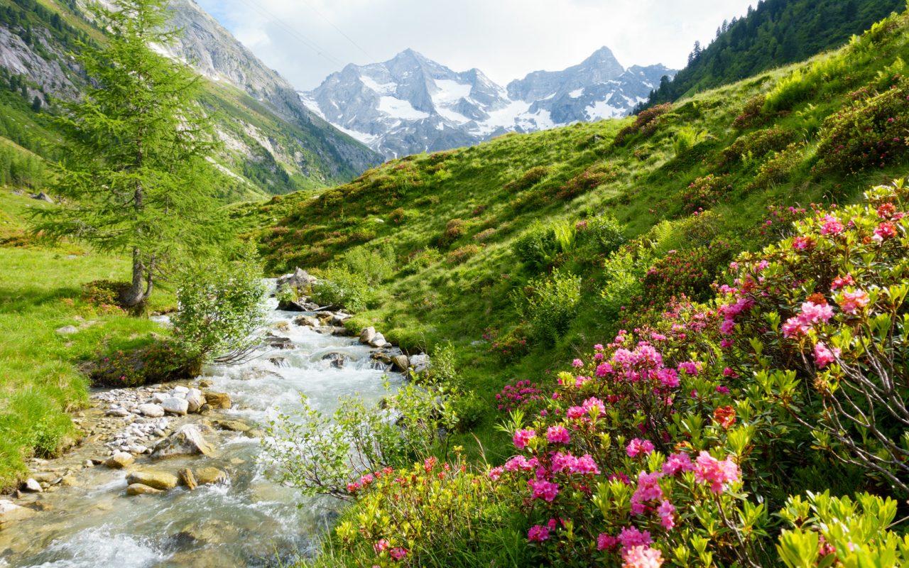 Tiroler Alpen Kräuterhof