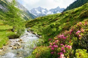 100% naturreine ätherische Öle von Tiroler Kräuterhof